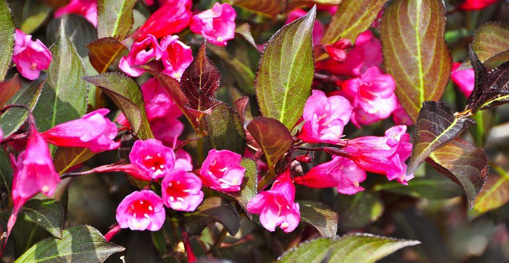 Backyard Beauty, Kaplan Residence, Pound Ridge, NY