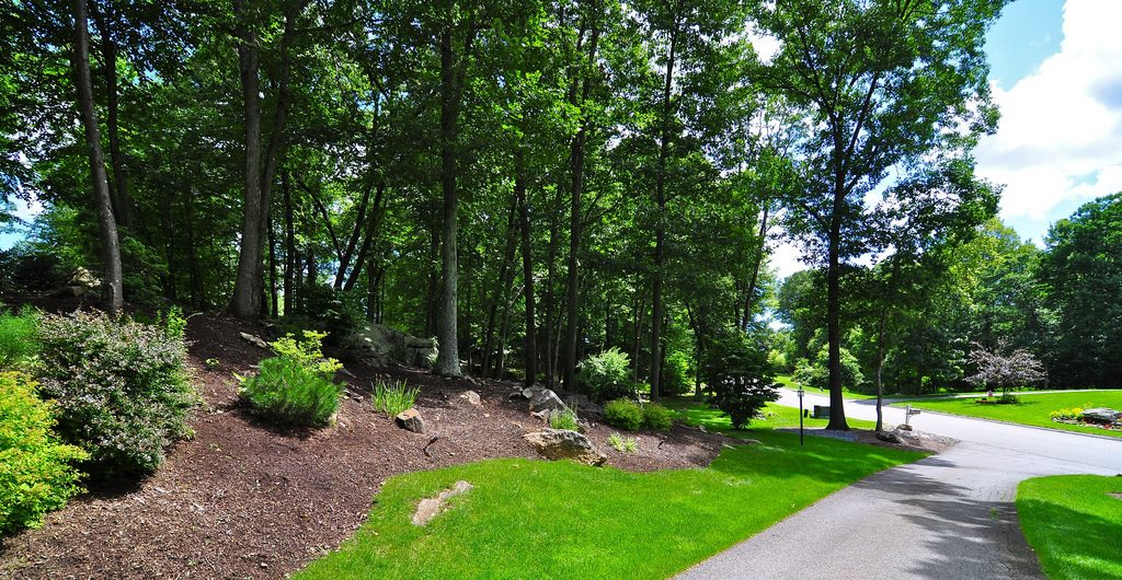 Residential Woodland Landscape, Putnam County, NY