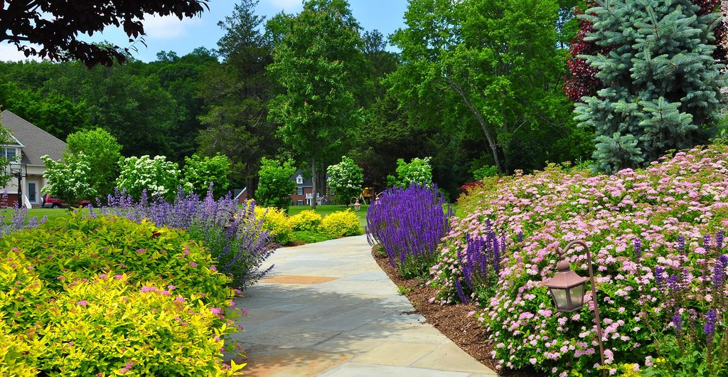 Summer Color Garden, Westchester County